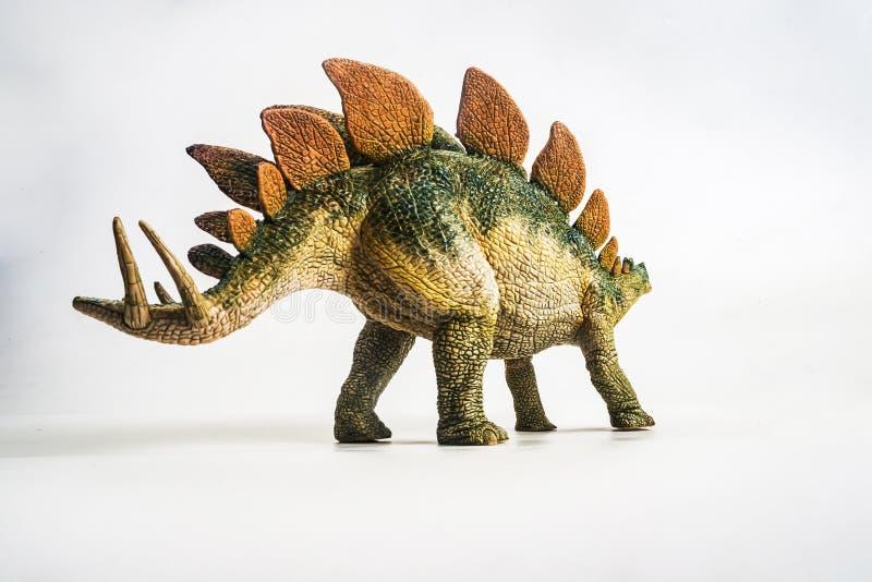 Dinossauro, Stegosaurus no fundo branco imagem de stock royalty free