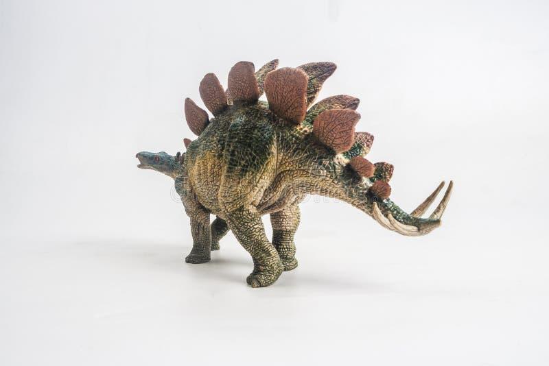 Dinossauro, Stegosaurus no fundo branco imagens de stock royalty free