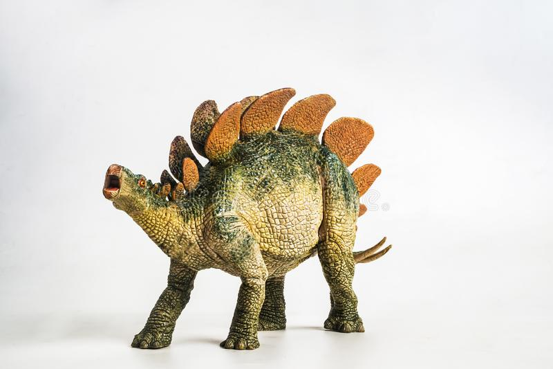 Dinossauro, Stegosaurus no fundo branco foto de stock royalty free