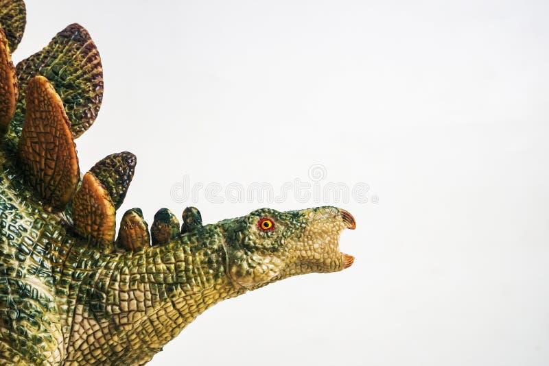 Dinossauro, Stegosaurus no fundo branco foto de stock