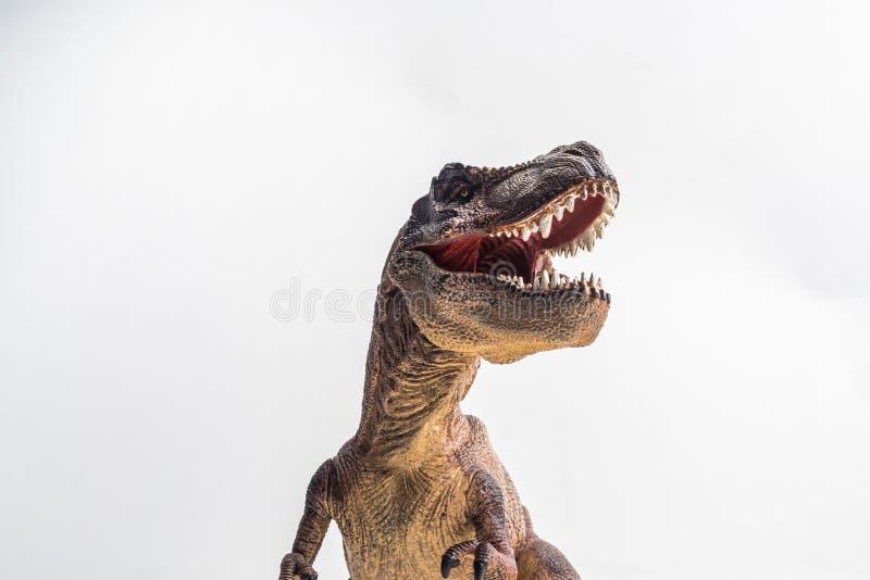 Dinossauro, T-rex, tiranossauro no fundo branco fotografia de stock royalty free