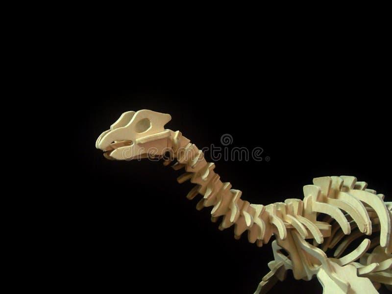 Dinosur Borns Study Stock Photography