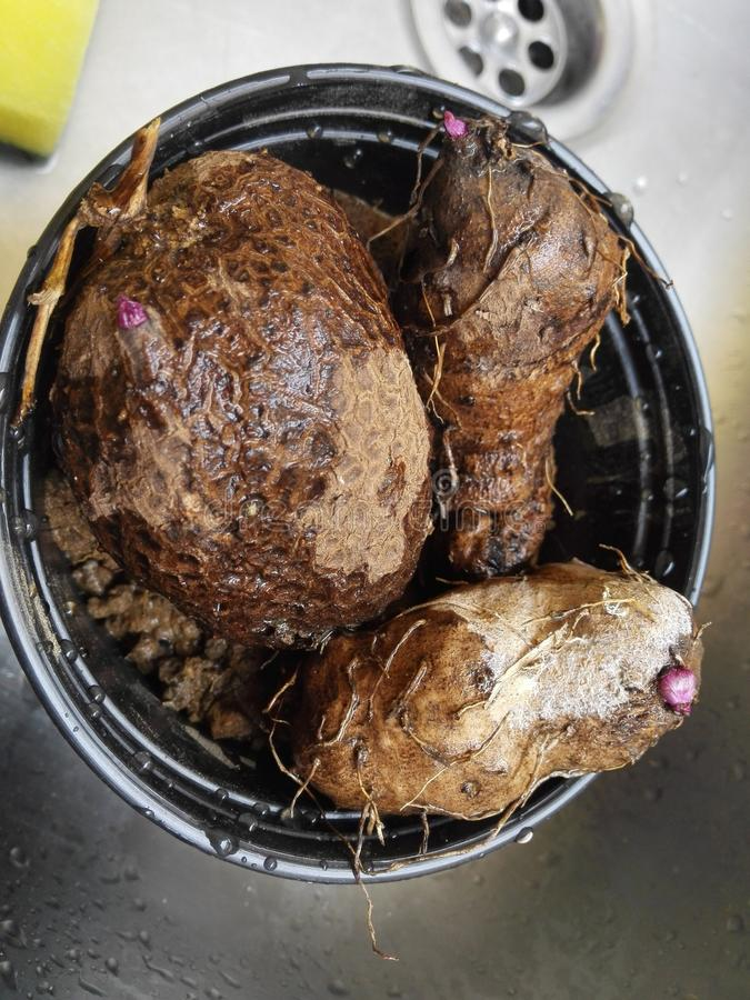 Dioscorea alata royalty-vrije stock afbeelding