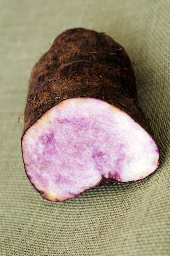 Download Dioscorea alata linn stock image. Image of purple, ugly - 33855049