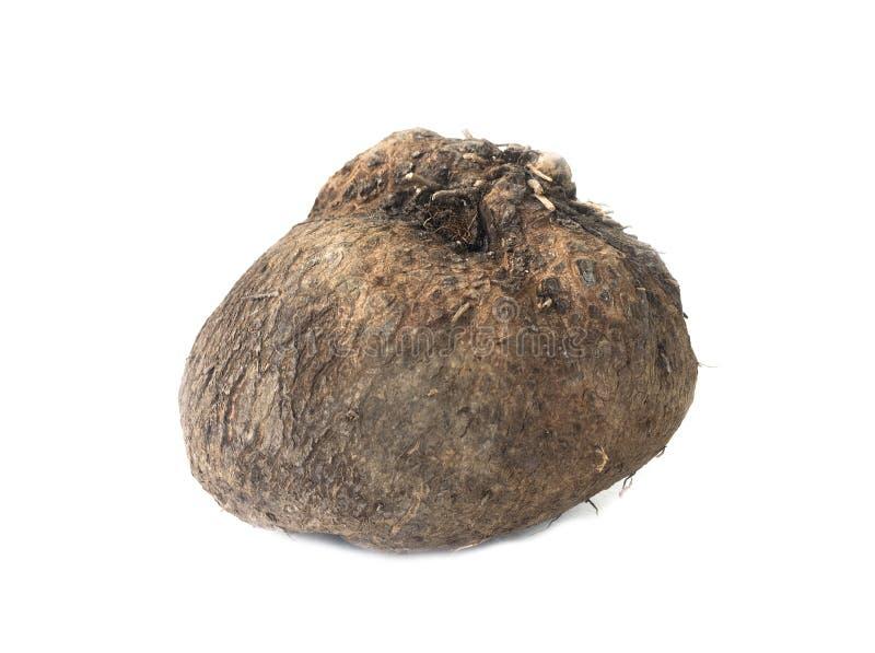 Dioscorea alata or yam on white background. Dioscorea alata or yam isolated on white background royalty free stock image