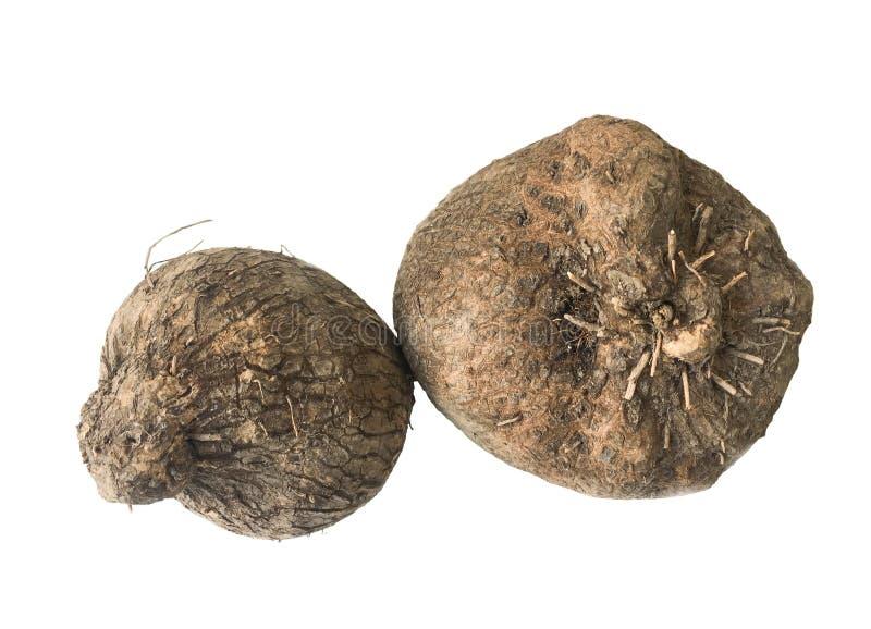 Dioscorea alata or yam on white background. Dioscorea alata or yam isolated on white background royalty free stock images