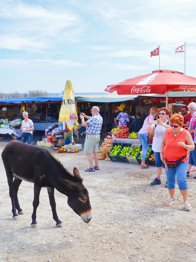 Dipkarpaz, τουρκική βόρεια Κύπρος - 3 Οκτωβρίου 2018: Άγριος γάιδαρος στην υπαίθρια αγορά φρούτων Οι τουρίστες παίρνουν τις εικόν στοκ φωτογραφίες με δικαίωμα ελεύθερης χρήσης