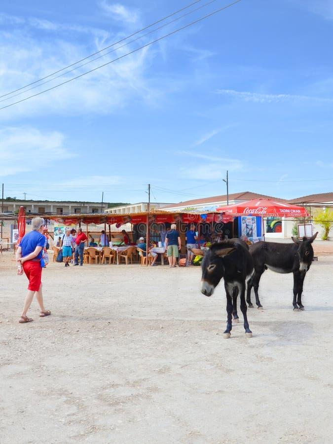 Dipkarpaz, Cipro del Nord - 3 ottobre 2018: Asini selvaggi sulla via del villaggio cipriota Caff? all'aperto nel fondo Gli animal immagine stock