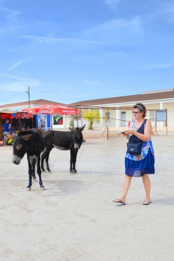 Dipkarpaz, Karpas półwysep Północny Cypr, Oct, - 3rd 2018: Ulicy brać na słonecznym dniu z dzikimi osłami Cypryjski miasto i zdjęcia royalty free
