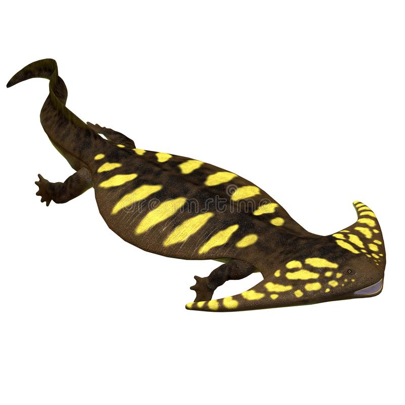 Diplocaulus Amphibian Side Profile. Diplocaulus was an amphibian tetrapod that lived in the Permian and Carboniferous Periods of North America and Africa stock illustration