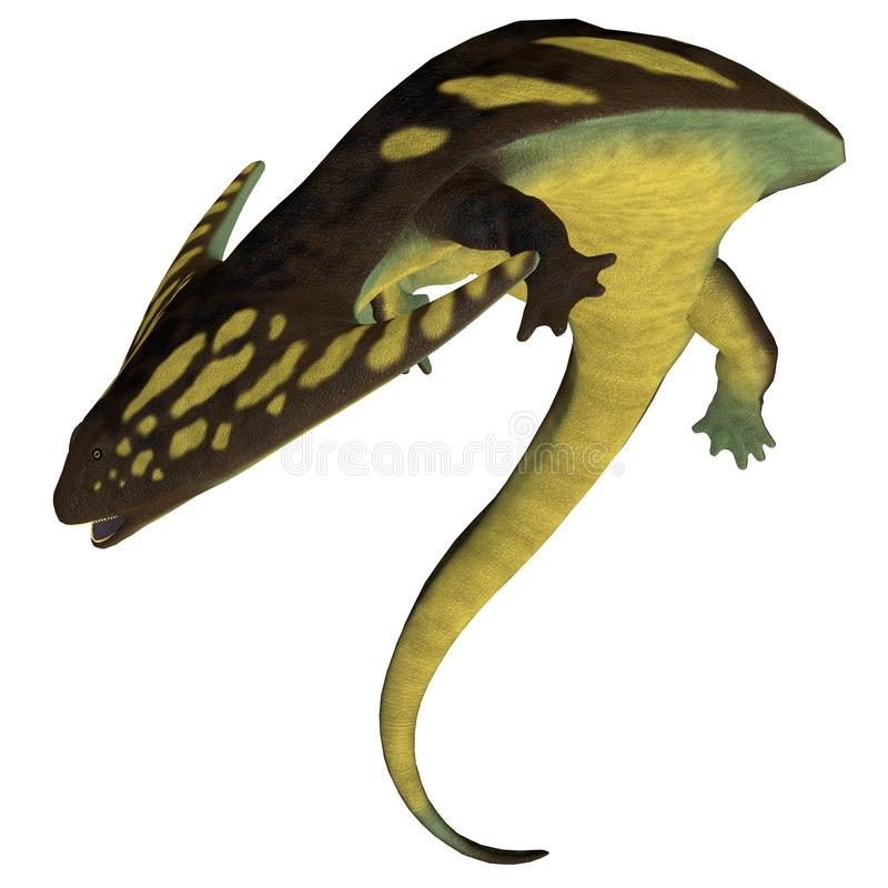 Diplocaulus Amphibian on White. Diplocaulus was an amphibian tetrapod that lived in the Permian and Carboniferous Periods of North America and Africa royalty free illustration