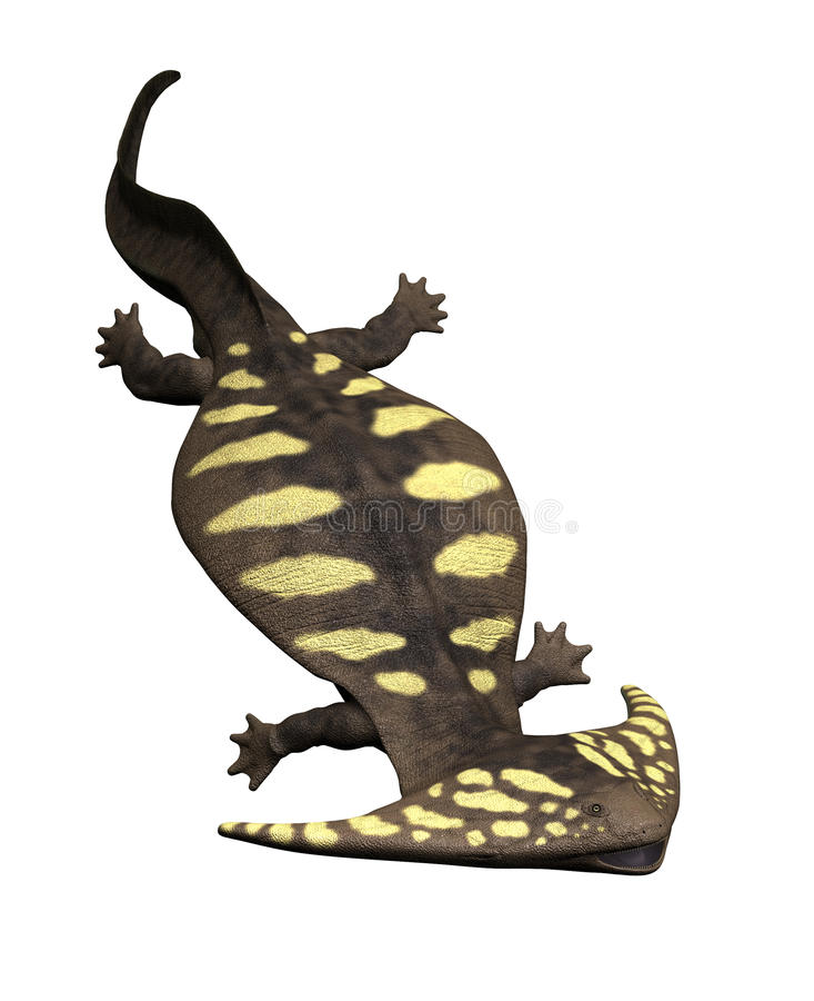 Diplocaulus - anfibio prehistórico libre illustration