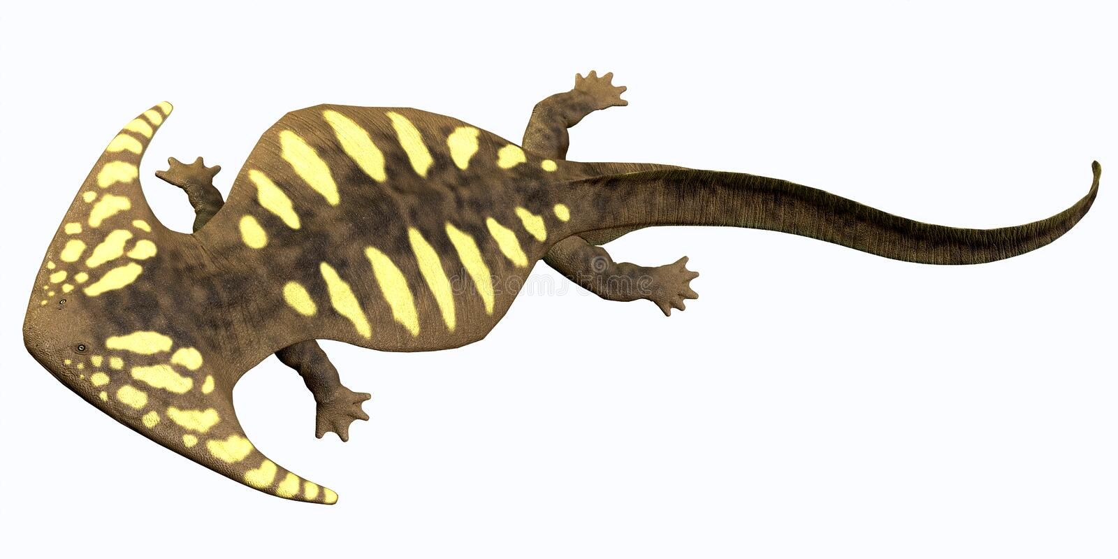 Diplocaulus Permian Amphibian Stock Illustration