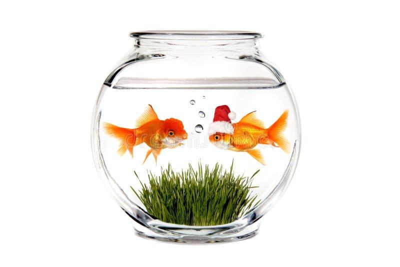 dire de Santa de goldfish de Noël veut ce qui photos libres de droits