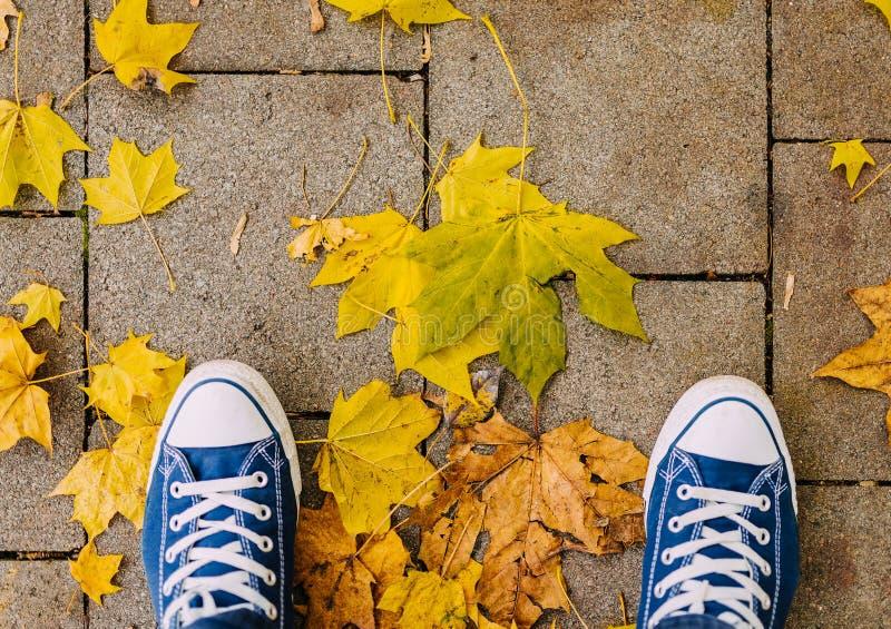 Direct boven schot van schoenen en kleurrijke de herfstbladeren op bestrating stock afbeeldingen