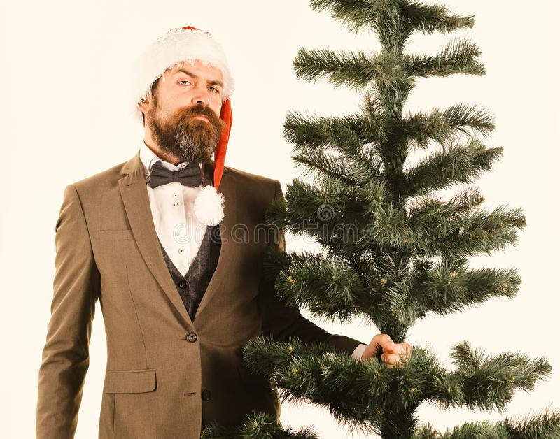 Director with beard gets ready for Christmas. Christmas corporate party. Concept. Businessman with proud face carries bald Christmas tree. Man in smart suit and royalty free stock image