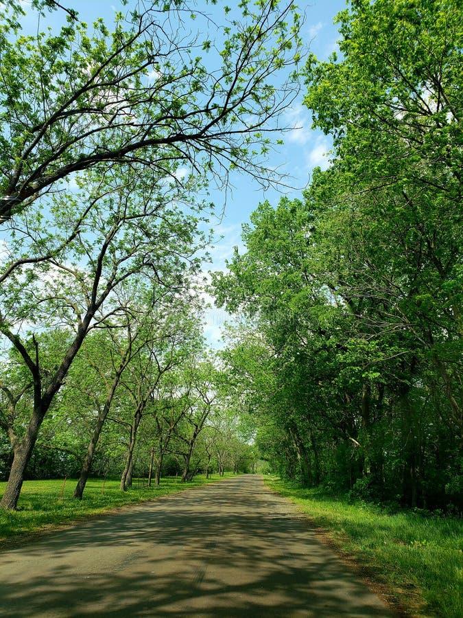 Direkte Bäume lizenzfreies stockbild
