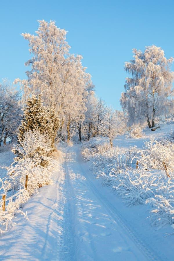 Direkte Straße in einer schneebedeckten Winterlandschaft mit Heidenfrost auf den Bäumen lizenzfreies stockbild