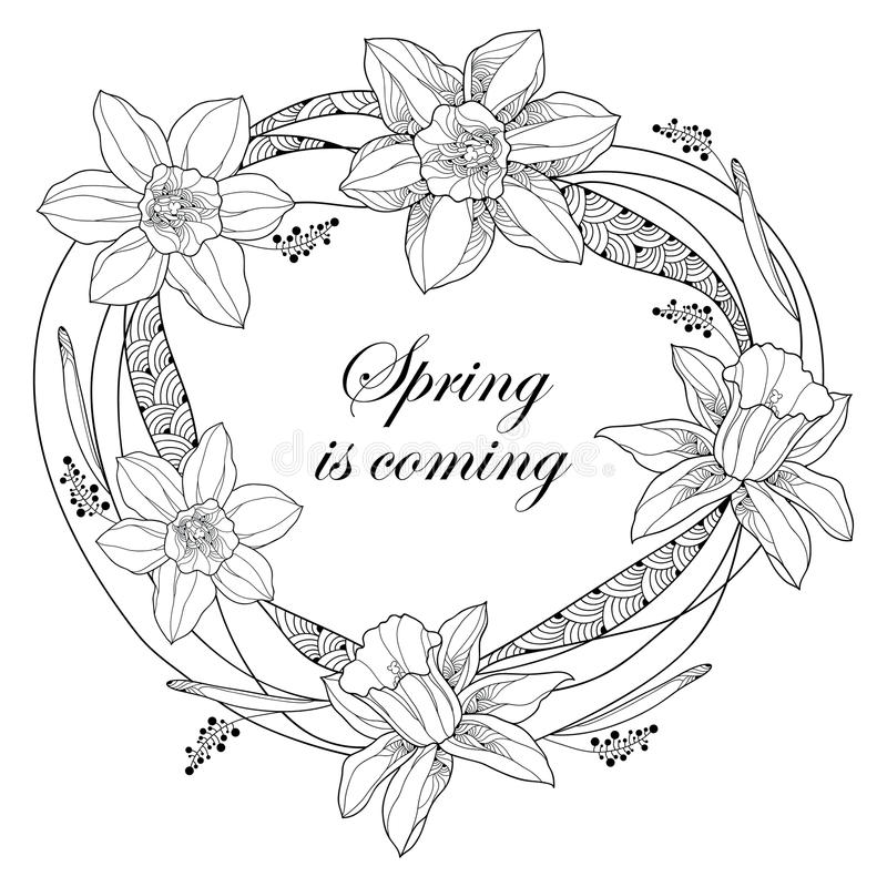 Dirigez autour du cadre avec des fleurs de narcisse ou de jonquille d'ensemble et des feuilles fleuries d'isolement Le ressort vi illustration de vecteur