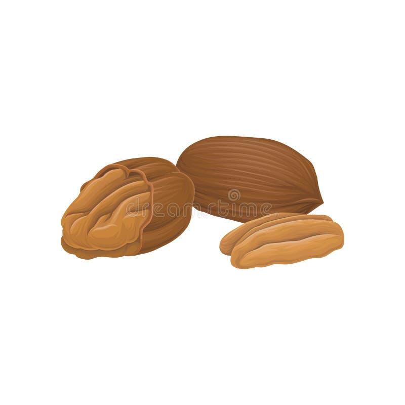 Dirigez l'icône des noix de pécan entières et ouvertes Nourriture organique et saine Produit naturel Nutrition végétarienne réali illustration de vecteur
