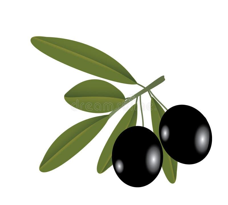 Dirigez l'illustration de l'olive sur le branchement photos stock