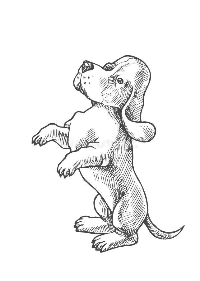 Dirigez l'illustration tirée par la main avec le petit chiot du chien de basset illustration de vecteur