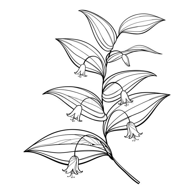 Dirigez la branche du contour Streptopus ou vous êtes levé groupe tordu de fleur de tige et feuilles fleuries dans le noir d'isol illustration libre de droits