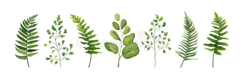 Dirigez la collection d'ensemble d'éléments de concepteur de la fougère verte de forêt pour illustration libre de droits