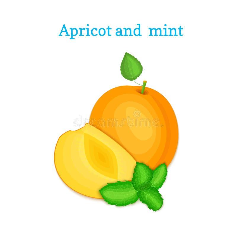 Dirigez la composition de quelques abricots et feuilles en bon état L'arricot mûr porte des fruits regard appétissant Groupe de p illustration libre de droits