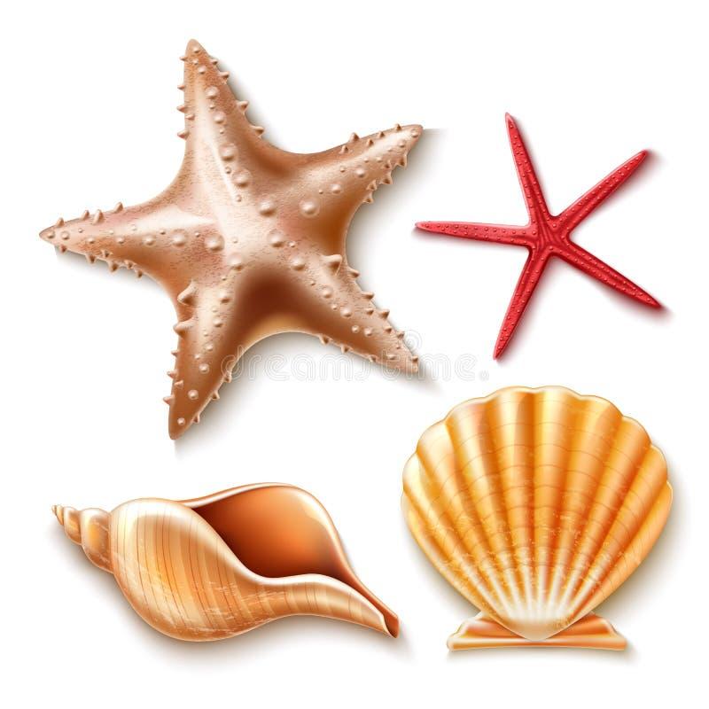 Dirigez la coquille réaliste de la mer 3d, ensemble d'étoiles de mer illustration libre de droits