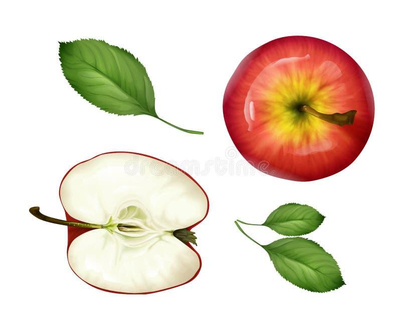 Dirigez la moitié réaliste de pomme, vue supérieure réglée par feuilles illustration de vecteur