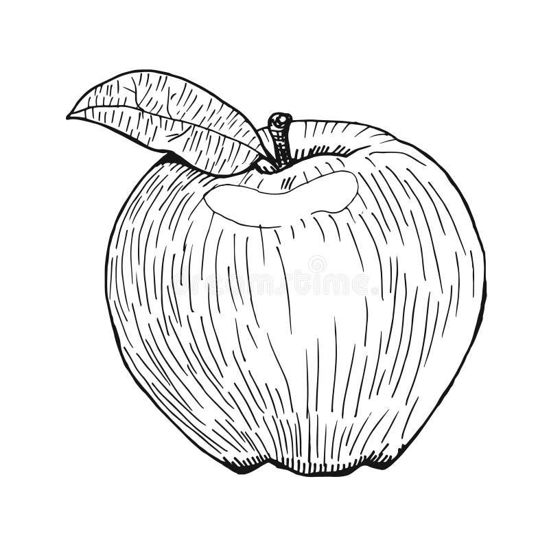 Dirigez la pomme tirée par la main, gravant le style, stylo noir tiré par la main illustration de vecteur