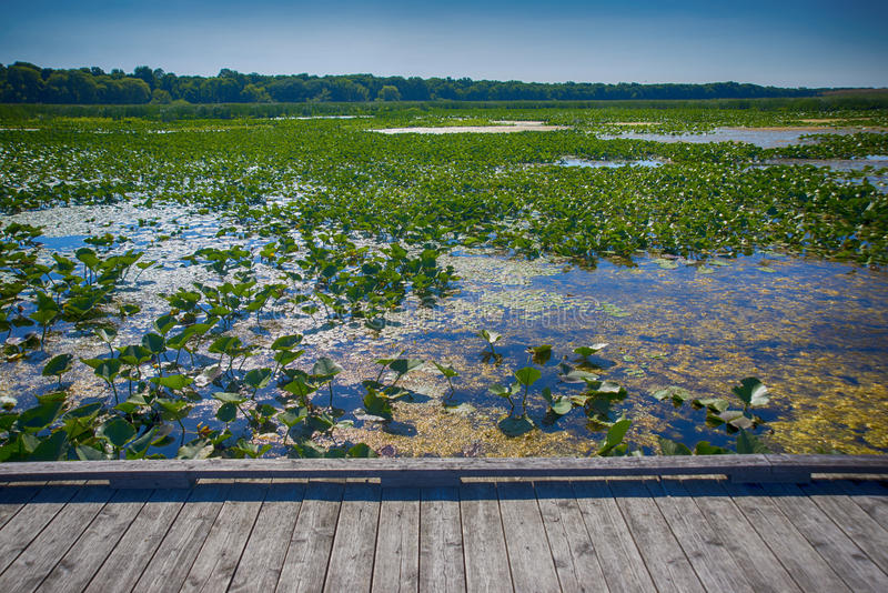 Dirigez la promenade de parc national de Pelee pendant l'été, Ontario, Cana photos stock
