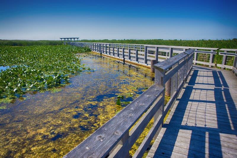 Dirigez la promenade de parc national de Pelee pendant l'été, Ontario, Cana images stock