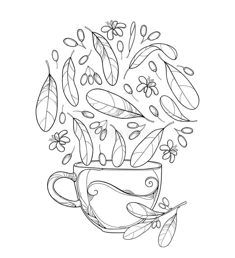 Dirigez la tasse de tisane de plante de cocaïne ou de coca d'Erythroxylum Feuille, fruit fleuri et fleur d'ensemble dans le noir  illustration libre de droits