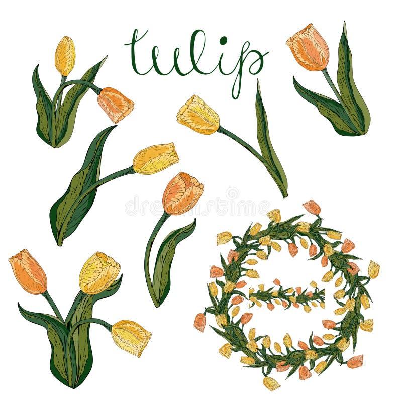 Dirigez la tulipe jaune et orange d'isolement sur le blanc illustration stock