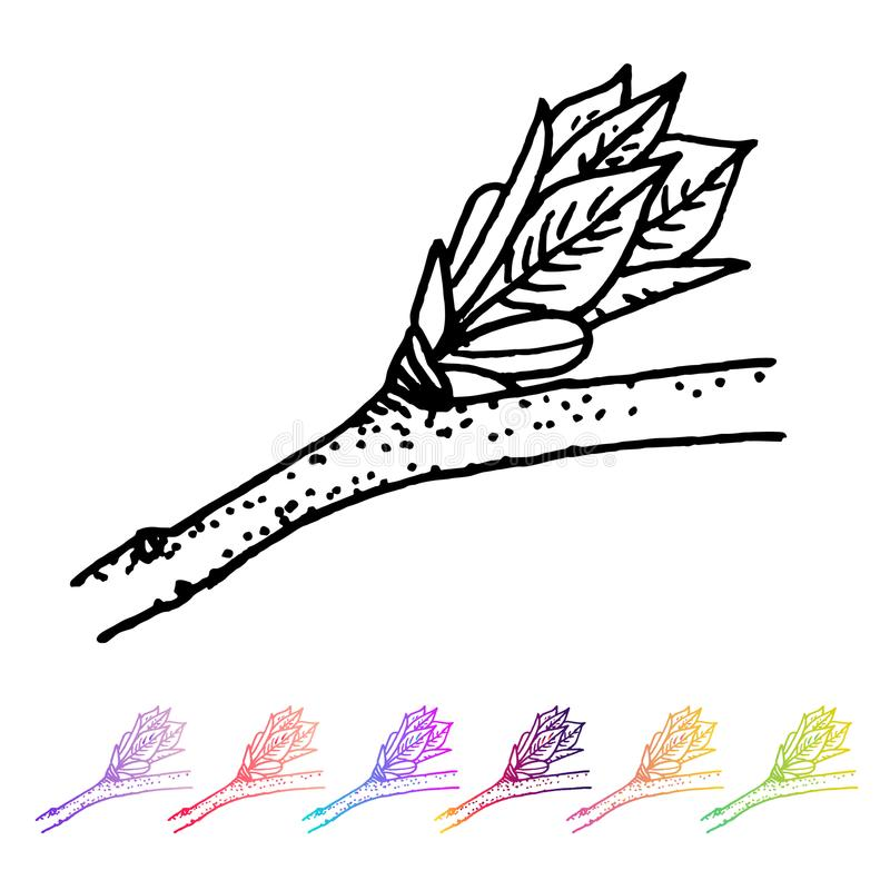 Dirigez le bourgeon de rein avec le modèle noir de feuilles dans la conception des installations Flore peinte à la main de jardin illustration libre de droits