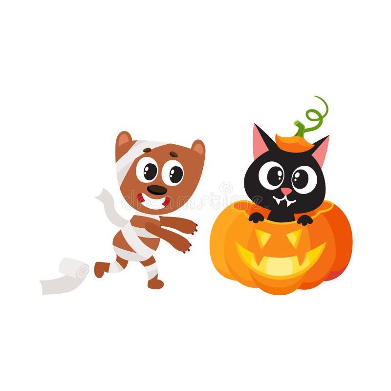 Dirigez le chat plat se reposant au potiron, chien de maman illustration stock