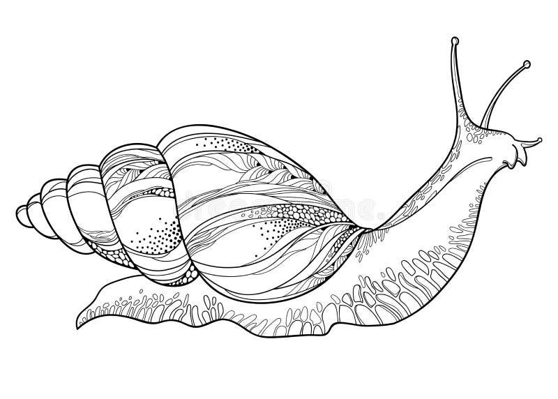 Dirigez le dessin de l'escargot d'Achatina ou de l'escargot de terre géant africain dans la coquille conique dans le noir d'isole illustration stock