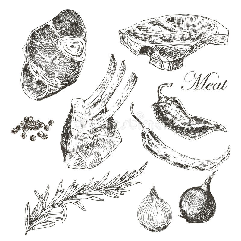 Dirigez le dessin de main de viande de bifteck avec le poivre et illustration libre de droits