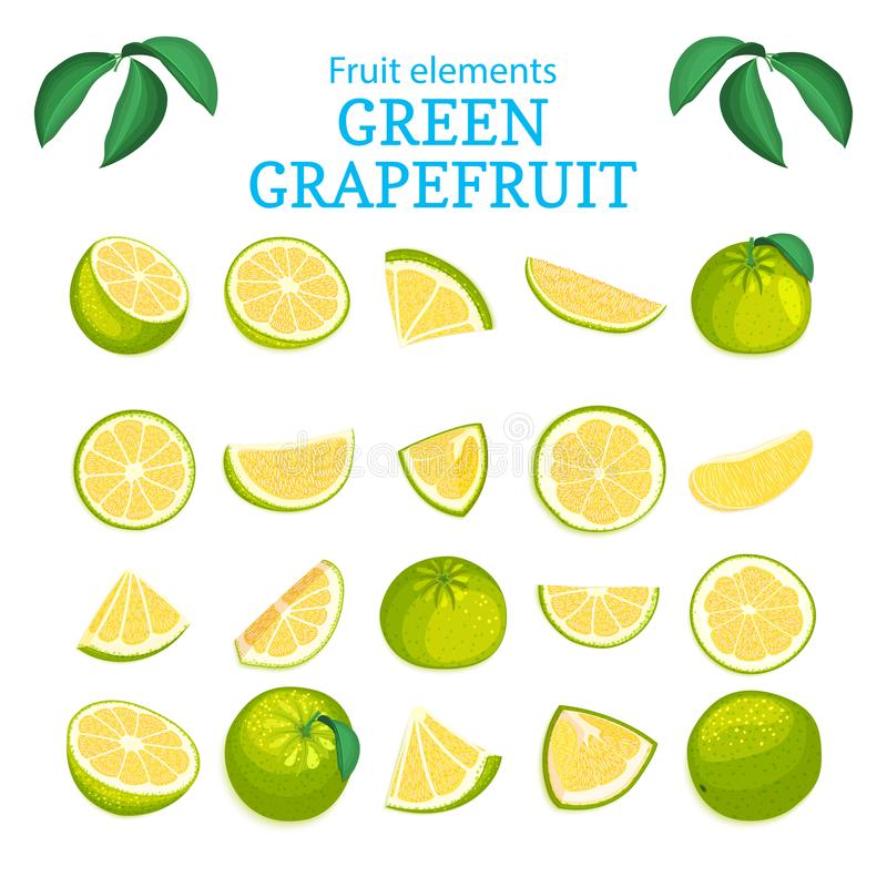 Dirigez le grand ensemble de fruits tropicaux mûrs de pamplemousse illustration stock