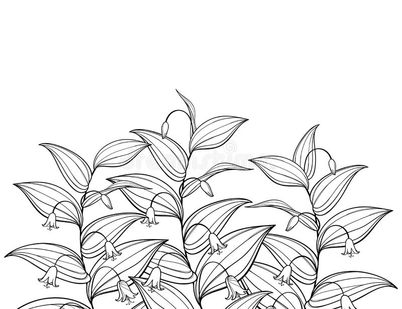 Dirigez le groupe de contour Streptopus ou vous êtes levé les fleurs tordues de tige et les feuilles fleuries dans le noir d'isol illustration libre de droits