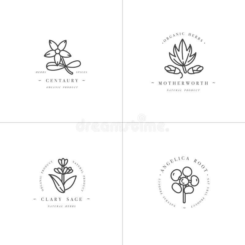 Dirigez les calibres et les emblèmes monochromes de scénographie - les herbes et les épices saines Différentes usines médicinales illustration de vecteur