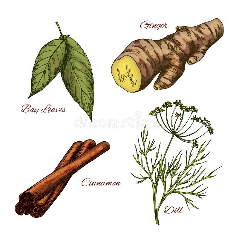 Dirigez les icônes de croquis des assaisonnements d'épice et d'herbe illustration de vecteur