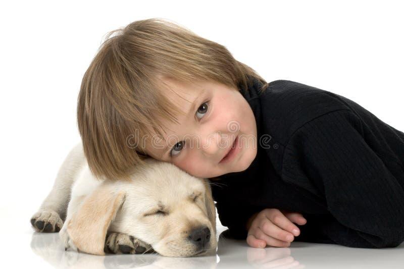 Dirija no filhote de cachorro imagens de stock