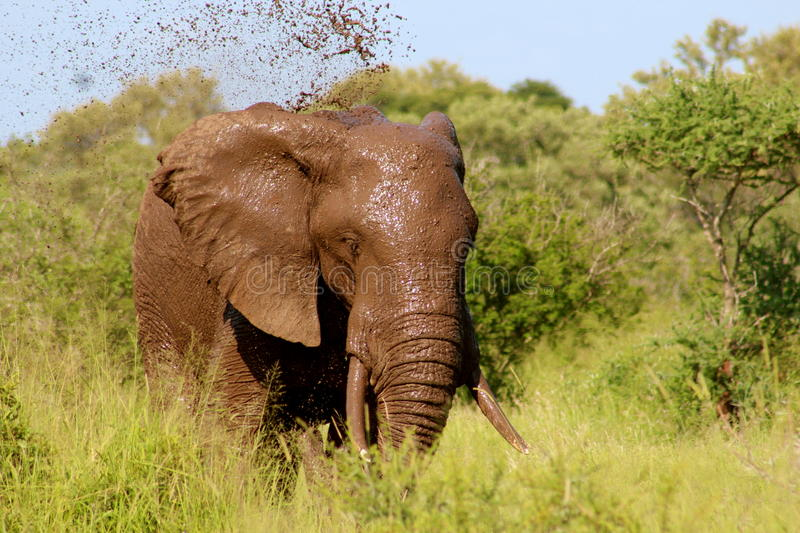 Dirt Elephant On Green Grass Field Under Blue Sky During Daytime Free Public Domain Cc0 Image