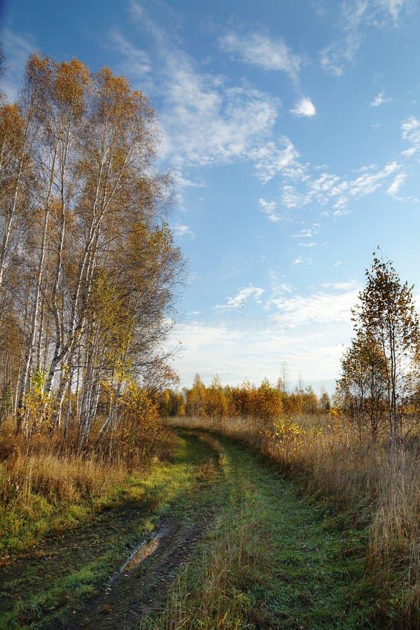 Dirt Path In An Autumn Wood Stock Photo