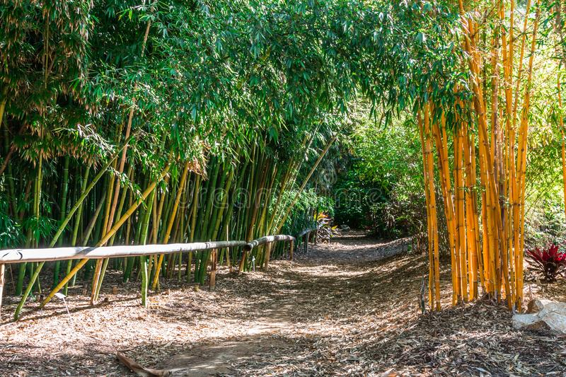 Dirt Path With Fence in a Bamboo Forest stock images
