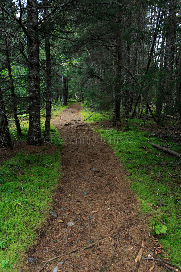 Dirt path heads into wilderness of remote pine forests. Dirt trail heads into wilderness of remote pine forests stock photos