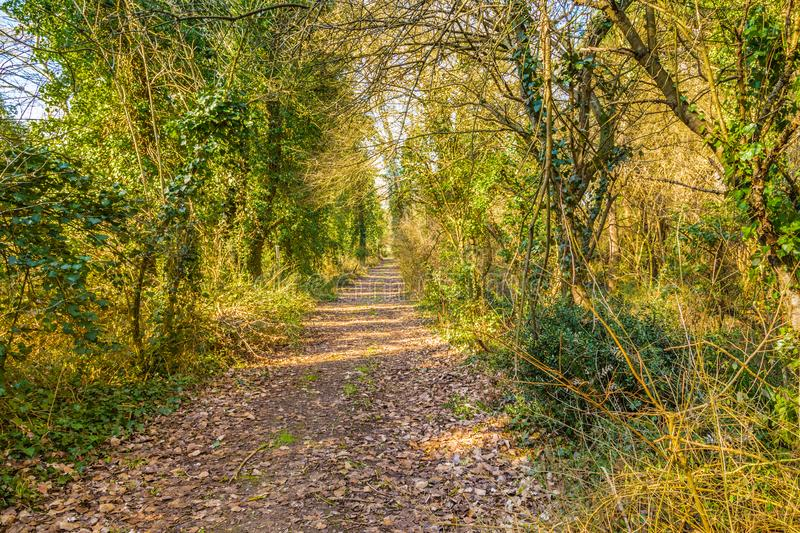 Dirt path through pine forest. Dirt path through the pine forest stock photo